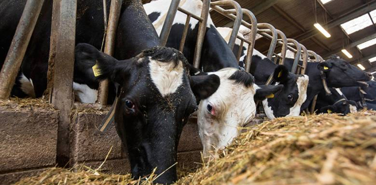 Punjab Livestock policy to be presented before cabinet for final approval